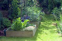 Vegetable beds with variegated thyme, Lovage, asparagus and artichokes, sweet peas