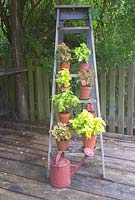 Coleus plants in terracotta pots on wooden steps
