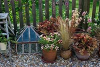 Terracotta pots with heucheras, grasses and Petunia 'Crazytunia Pulse on shingled patio