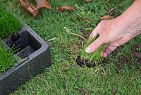 Removal of perennial weeds, by hand.  Repair hole using plug of grass grown for purpose in modules