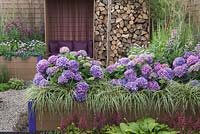 Hydrangeas, grasses, hostas and a recessed seating area enclosed by raised beds and a feature wood store. Futureproof, Waterproof Garden, RHS Tatton Flower Show 2011, Cheshire