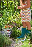 Girl harvesting herbs and vegetables.