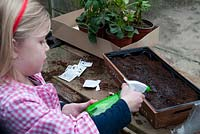 Watering newly sown seeds