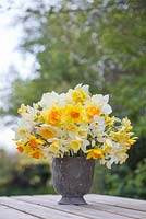 Floral display in metal pot containing Narcissus 'Juanita', 'Finland', 'Red Devon', 'Fragrant Breeze', 'Obdam' and 'Mount Hood'