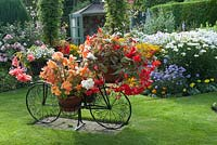 Decorative bicycle holding pots with Begonia and Lobelia on lawn, summer house and colourful mixed bed filled with perennials and tender bedding plants.