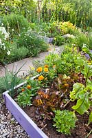 Organic garden with raised beds. Lactuca sativa 'Red Oak Leaf', marigolds, beetroots.