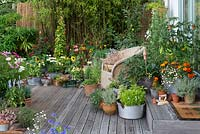 Side view of raised summer deck with pots of cosmos, sweet peas, fuchsias, thunbergia, roses, salvias, cornflowers, sunflowers, leucanthemum, marigolds, tomato, apple and herbs. Behind, screen of black bamboo.