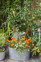 Planted in old galvanised wash tub, cherry tomato Supersweet 100, above white erigeron and French marigolds, an organic pest deterrent.