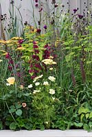 A mixed border with Penstemon, Echinacea, Achillea, Rosa, Cosmos, Pennisetum and Digitalis. Squires 80th Anniversary Garden designed by Catherine Macdonald.