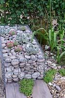 Beachscape oyster garden. Pebble filled gabion basket with sempervivums. Designers: Sarah Morgan. RHS Hampton Court Palace Flower Show 2016