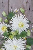 Floral display of Dahlia 'My Love' with Humulus lupulus 'Golden Tassels' on a wooden surface