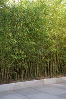 Tall Bamboo planted in patio border to block view to neighbours house