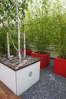 Containers planted with Betula utilis 'Doorenbos' and Fargesia aurea on a roof terrace garden in Rotterdam, Holland.