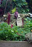 Vegetable beds with green corduroy jacket scarecrow, herbs and amaranthus