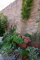 Detail of garden with corten steel tiered bed shows mixed planting of Scaevola - native fan flower, Crassula ovata 'Gollum', Sedum 'Autumn Joy' and various grasses. Bamboo and Mandevilla laxa are trained up a brick wall using chains. An Asia ceramic chair is seen.