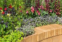 Wooden sculpted bench over wide sunken curving pathway. Raised bed planting features edible plants including Amaranthus 'Red Army', Petroselinum crispum and Salvia officinalis 'Tricolor', as well as cannas and purple-leaved dahlias. Witan Investment Trust Global Growth Garden, RHS Hampton Court Flower Show 2016