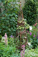A white Clematis 'Chantilly' is trained up a woven willow obelisk, adding height amidst lupins, foxgloves and astrantia.