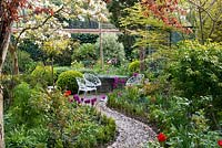 A walled town garden with curved pebble path leading to a circular patio seating area. Alongside, mixed borders are planted with box, forget-me-nots and tulips: right of path 'Burgundy', left 'Blue Aimable'.