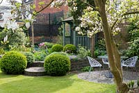 A walled town garden with flowering Magnolia tree and circular patio with table and chairs. The raised bed is planted with box balls and tulips in front of a wooden gazebo.