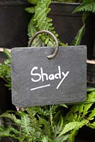 Plant sign for Shady plants