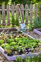 Vegetable and herb bed in spring. Swiss chard, lettuce, onion, kohlrabi, chives sage, perennials.