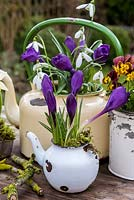 Winter bulbs planted in old enamel teapots