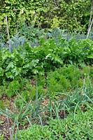 Vegetable garden with Onion, Carrot, Parsnip, Leek growing in rows and mulched with RCW