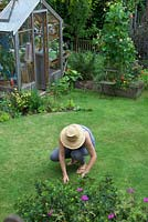 Weeding lawn by hand in garden with greenhouse