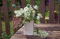 Astrantia major 'Shaggy', Daucus dara and poppy seedheads in floral arrangement