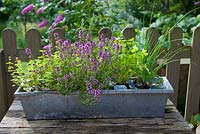 Herbs in galvanised window box on wooden table