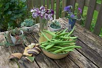Picked runner beans on garden table with sweet peas and succulents