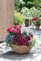 Basket planted with Petunia Sweetunia 'Suzie Storm', Dahlia and Lobelia