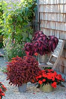 Terrace with containers. Plants include Impatiens Neu-Guinea LaTina 'Orange'