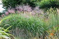 Miscanthus sinensis 'Emmanuel Lepage', Thalictrum speciosum and Helenium 'Sahin's Early Flowerer'