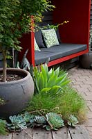 Detail of a potted Acer palmatum, Japanese maple, Agave attenuata, Century plant, grasses and Echeverias in front of the red painted sitting pod.