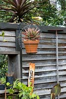 A wire basket with a potted Aloe in it suspended on a black metal wall bracket attached to a recycled rustic timber wall.
