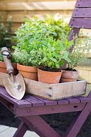 Selection of potted herbs in wooden tray