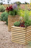 Wooden planters planted with Stipa tenuissima 'Ponytails', Coleus 'Wall Street', Perovskia atriplicifolia 'Blue Spire', Panicum virgatum Fontaine, Heuchera Little Cutie 'Blondie' and Hebe, Prostanthera ovalifolia 'Variegata' and Pittosporum eugenioides 'Variegatum'