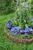 Red cabbage, borage, beans and Erigeron karvinskianus in a round wicker planter. Belmond Enchanted Gardens - RHS Chatsworth Flower Show 2017 - Designer: Butter Wakefield - Gold - People's Choice