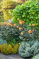 September border with Tagetes tenuifolia 'Gnom', Dahlia 'David Howard', runner beans and Santolina chamaecyparissus. Design: Alie Stoffers