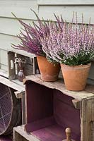 Vintage wooden crate storage with potted heathers