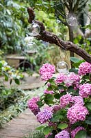 Hydrangea with tea lights. Hackney garden London