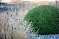 Domed box topiary with Molinia caerulea 'Poul Peterson', purple moor grass, and Dianthus carthusianorum, German pink, in winter at Bury Court Gardens, Hampshire. Designed by Piet Oudolf and John Coke.