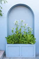 Mediterranean style garden with paved area and blue arched wall and Nicotiana sylvestris in a planter - Viking Cruises World of Discovery Garden, RHS Hampton Court Palace Flower Show 2017 - Designer: Paul Hervey-Brookes