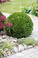 Buxus sempervirens ball topiary and Carex oshimensis 'Evergold' amongst oval stones. The Tesco 'Every little helps' garden, BBC Gardener's World live show 2017, NEC Birmingham, Designer: Owen Morgan