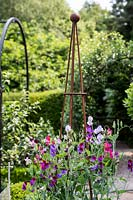 Sweet pea 'Old Spice' in an obelisk in a Tom Hoblyn designed garden at Heatherbrae