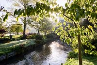 A tributary of the River Avon running through the Japanese garden at Heale House, Middle Woodford, Wiltshire with ferns and Gunnera manicata fringing streams