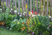 Wooden picket fence with Tulips, Erysimum - wallflowers and Fritillaria persica