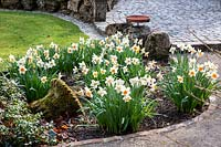 Daffodils planted in groups in a border with moss covered stones and amphore next to a driveway