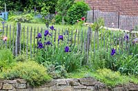 Iris barbata, Paeonia and Papaver orientale - Oriental poppy on top of a granite stone wall and backed by a wooden picket fence